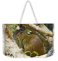 Red-rumped Agouti Weekender Tote Bag