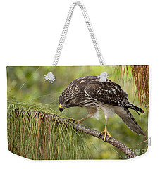 Red Shouldered Hawk Photo Weekender Tote Bag by Meg Rousher