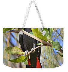 Red-tailed Black-cockatoo Queensland Weekender Tote Bag