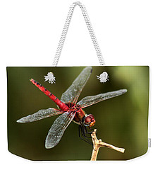 Red-veined Darter  - My Joystick Weekender Tote Bag