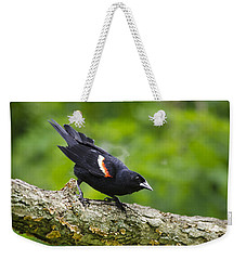 Red-winged Blackbird Weekender Tote Bag by Christina Rollo