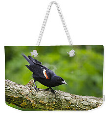 Red Winged Blackbird Weekender Tote Bag by Christina Rollo