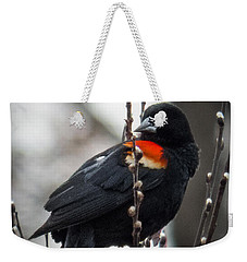 Red Winged Blackbird In Pussy Willows Weekender Tote Bag by Patti Deters