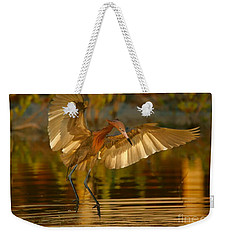 Reddish Egret In Golden Sunlight Weekender Tote Bag by Myrna Bradshaw