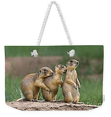 Weekender Tote Bag featuring the photograph Relaxing Utah Prairie Dogs Cynomys Parvidens Wild Utah by Dave Welling