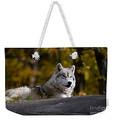 Weekender Tote Bag featuring the photograph Resting Arctic Wolf On Rocks by Wolves Only