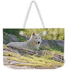Weekender Tote Bag featuring the photograph Resting Arctic Wolf by Wolves Only
