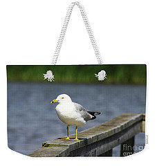 Ring-billed Gull Weekender Tote Bag