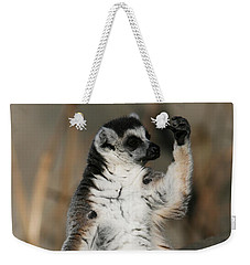 Weekender Tote Bag featuring the photograph Ring-tailed Lemur by Judy Whitton