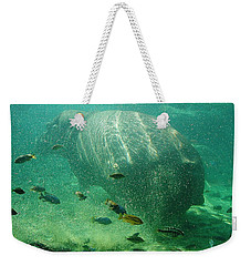 Weekender Tote Bag featuring the photograph River Horse by David Nicholls