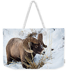 Weekender Tote Bag featuring the photograph Rocky Mountain Bighorn Sheep by Michael Chatt