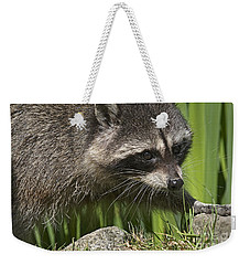 Rocky Raccoon Weekender Tote Bag by Sharon Talson
