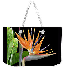 Weekender Tote Bag featuring the photograph Royal Beauty I - Bird Of Paradise by Ben and Raisa Gertsberg