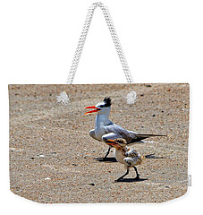 Weekender Tote Bag featuring the photograph Royal Tern With Chick by Ludwig Keck