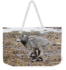 Weekender Tote Bag featuring the photograph Running Timber Wolf by Wolves Only