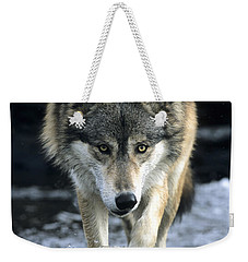 Running Wolf Weekender Tote Bag by Chris Scroggins