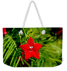 Weekender Tote Bag featuring the photograph Scarlet Morning Glory - Horizontal by Ramabhadran Thirupattur