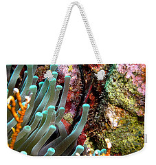 Sea Anemone And Coral Rainbow Wall Weekender Tote Bag by Amy McDaniel