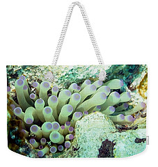 Sea Anemone With Squat Anemone Shrimp Family Weekender Tote Bag by Amy McDaniel