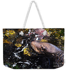 Sea Lion Posing For A Headshot Weekender Tote Bag