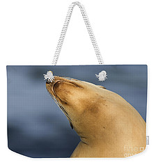 Weekender Tote Bag featuring the photograph Sea Lion Stretch by Bryan Keil