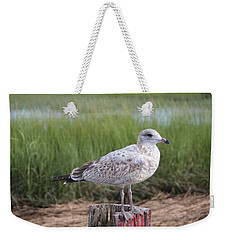 Weekender Tote Bag featuring the photograph Seagull by Karen Silvestri