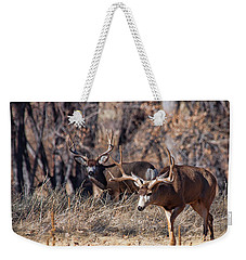 Weekender Tote Bag featuring the photograph Seeing Double by Jim Garrison
