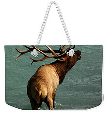 Weekender Tote Bag featuring the photograph Sending A Challenge by Vivian Christopher