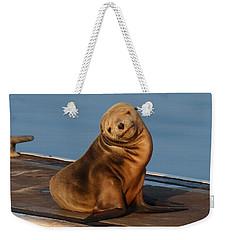 Shy Sea Lion Pup  Weekender Tote Bag