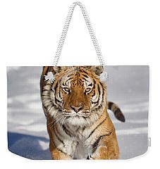 Siberian Tiger Coming Forward Weekender Tote Bag