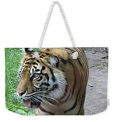 Weekender Tote Bag featuring the photograph Siberian Tiger by Lingfai Leung