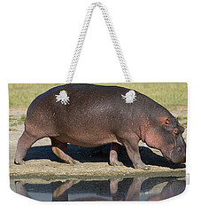 Side Profile Of A Hippopotamus Walking Weekender Tote Bag by Panoramic Images
