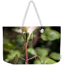Weekender Tote Bag featuring the photograph Single Rose by David Millenheft