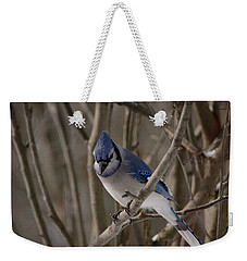Weekender Tote Bag featuring the photograph Sitting Pretty by David Porteus