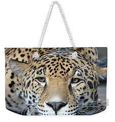 Sleepy Jaguar Weekender Tote Bag by Richard Bryce and Family