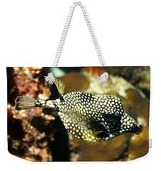 Smooth Trunkfish Weekender Tote Bag by Amy McDaniel