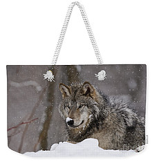 Snow Nose Weekender Tote Bag by Wolves Only