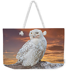 Snowy Owl Perched At Sunset Weekender Tote Bag