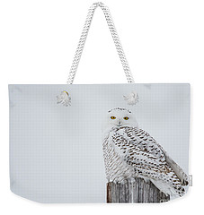 Snowy Owl Perfection Weekender Tote Bag by Cheryl Baxter