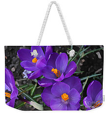 Weekender Tote Bag featuring the photograph Soft Purple Crocus by Judy Palkimas