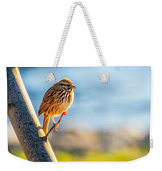 Song Sparrow Weekender Tote Bag by Bob Orsillo