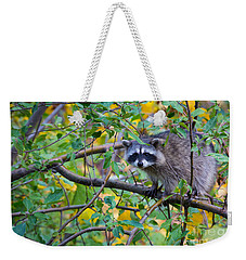 Spokane Raccoon Weekender Tote Bag by Inge Johnsson