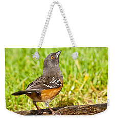 Spotted Towhee Looking Up Weekender Tote Bag