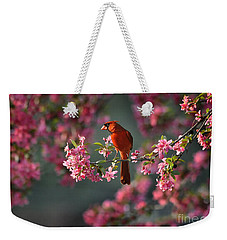 Weekender Tote Bag featuring the photograph Spring Morning Cardinal by Nava Thompson