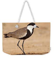 Spur-winged Lapwing Vanellus Spinosus Weekender Tote Bag