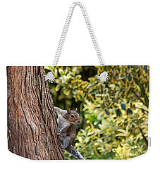 Weekender Tote Bag featuring the photograph Squirrel by Kate Brown