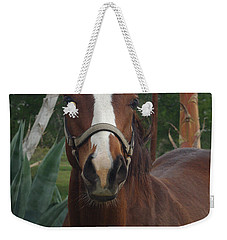 Weekender Tote Bag featuring the photograph Stared Down by Peter Piatt