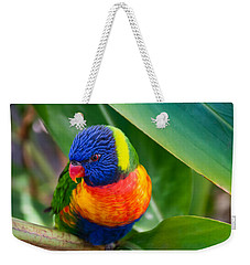 Striking Rainbow Lorakeet Weekender Tote Bag