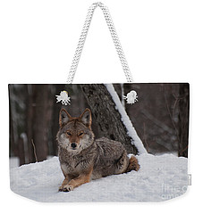 Weekender Tote Bag featuring the photograph Striking The Pose by Bianca Nadeau