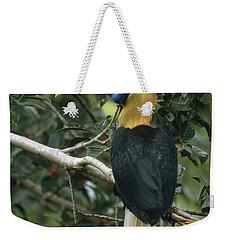 Sulawesi Red-knobbed Hornbill Male Weekender Tote Bag by Mark Jones